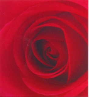 ENZYMES ROSE